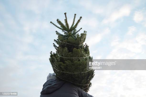 young man with fir tree against sky - carrying stock pictures, royalty-free photos & images