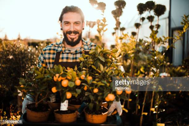 young man with tangerine trees - agricultural occupation stock pictures, royalty-free photos & images