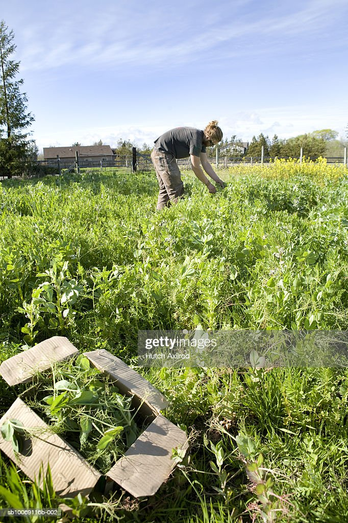 Young man working in field : Stockfoto