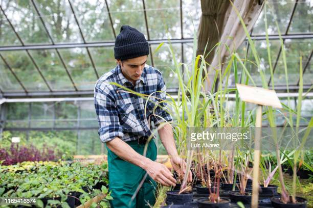 young man working in garden center - printed sleeve stock pictures, royalty-free photos & images