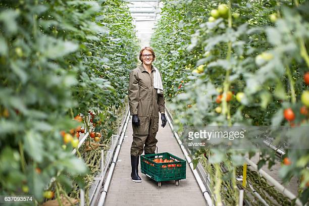 Young man working in greenhouse