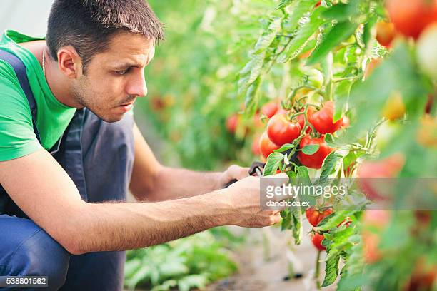 Young man working in the greenhouse