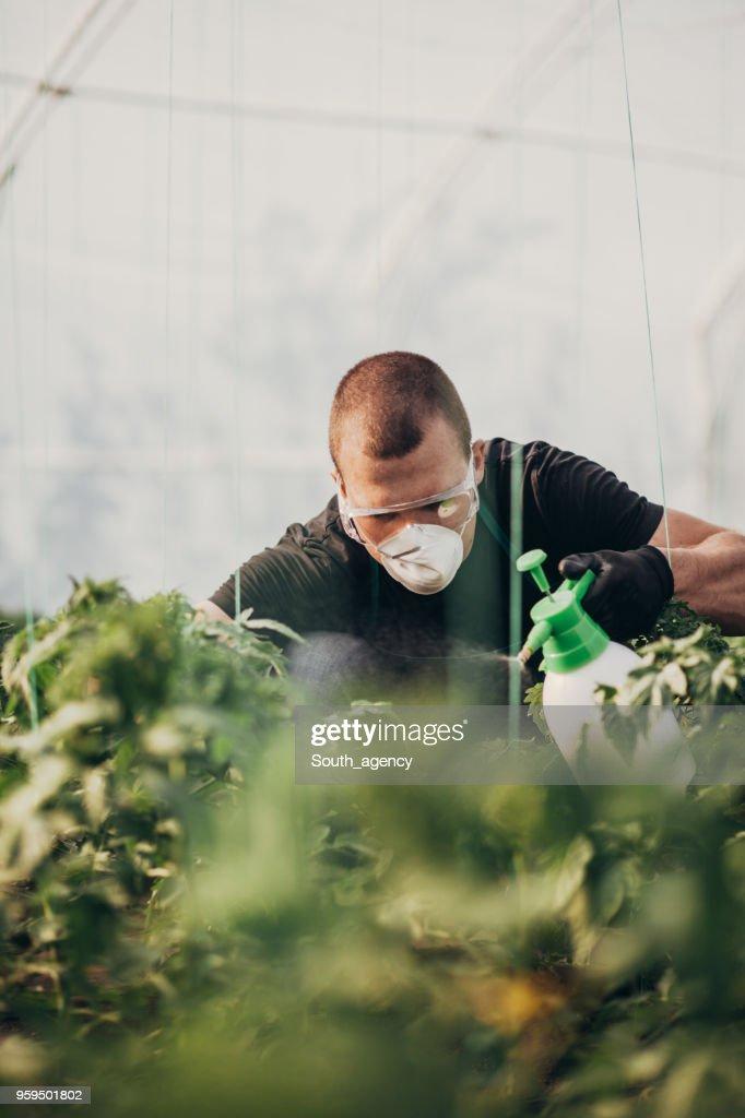 Junger Mann arbeiten im Gemüsegarten : Stock-Foto
