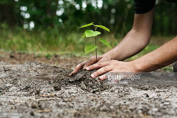 young man's hands planting tree sapling - plant stock pictures, royalty-free photos & images