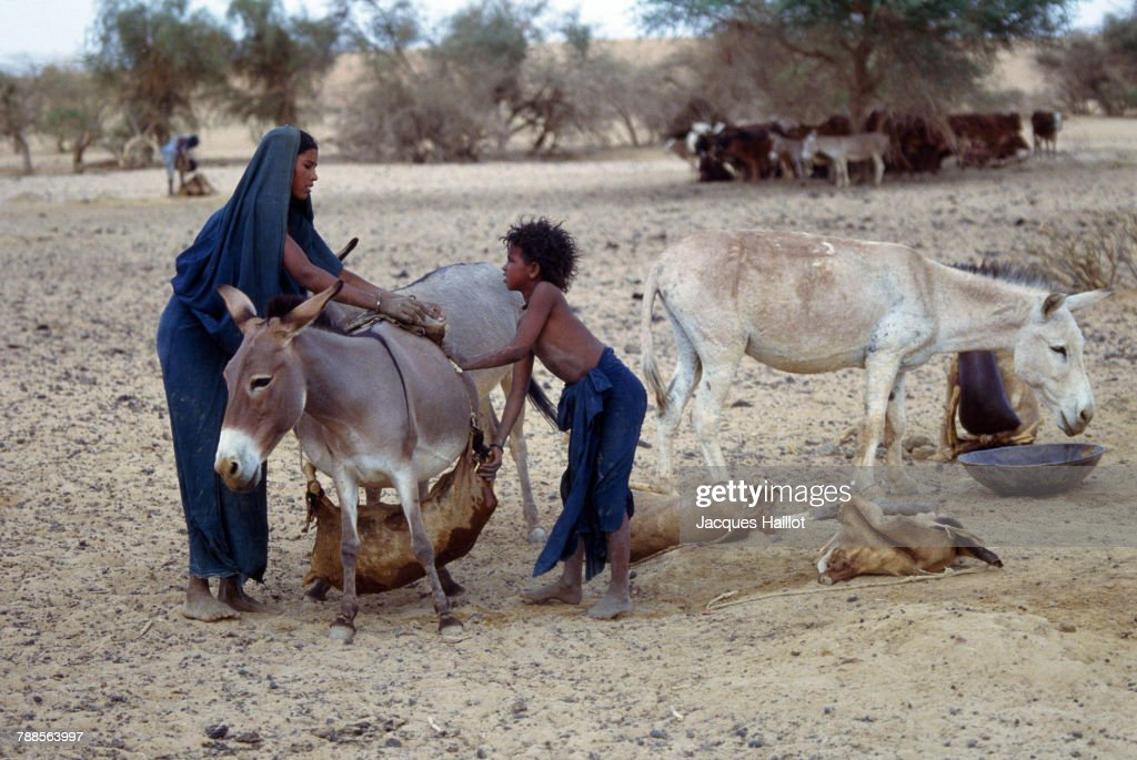 Young members of the Kel Kummer community prepare blood samples for transport. The Kel Kummer, a small tribe of ethnic Tuareg, have lived for centuries in the middle of the Sahara Desert. Cut off from the exterior world, their undiluted bloodline fascinates geneticists.