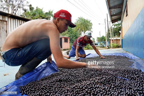 Young men dry acai fruit at Novo Horizonte riverside community, municipality of Carauari, in the heart of the Brazilian Amazon Forest, on March 16,...