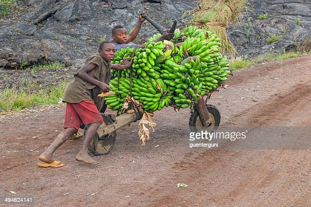 young men transporting cooking bananas on a roller - virunga national park stock pictures, royalty-free photos & images