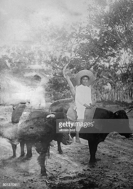 Young Mexican riding on an ox undated probably in the 1910's