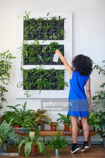 young mixed race female tending to planted wall in a sustainable modern office space. - sleeveless dress stock pictures, royalty-free photos & images