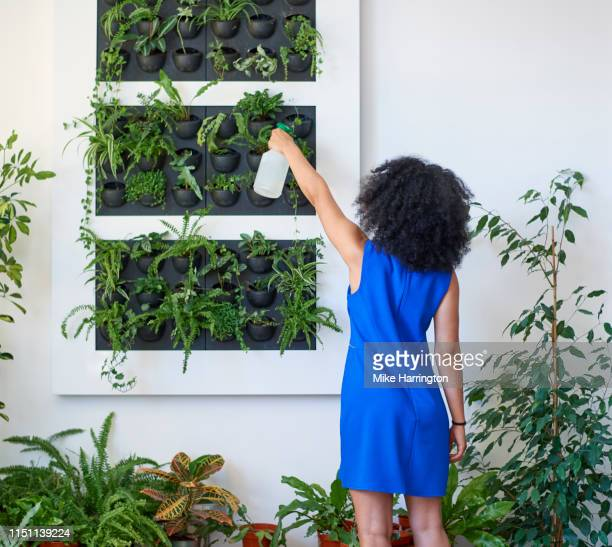 young mixed race female tending to planted wall in a sustainable modern office. - sleeveless dress stock pictures, royalty-free photos & images