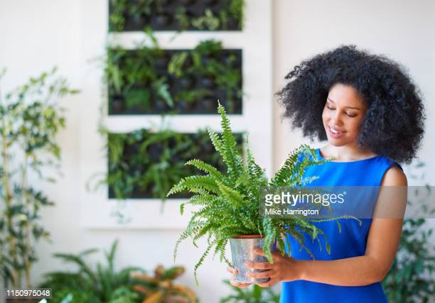 young mixed race female working in creative team in sustainable modern office tending to plant. - blue dress stock pictures, royalty-free photos & images