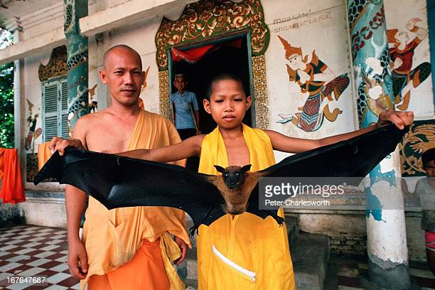 A young monk holding a fruit bat with a one meter wing span at the Ma Toc Bat Temple with various monks looking on