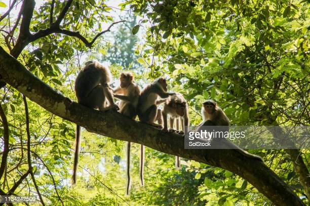 young monkey's cleaning eachother - animal stock pictures, royalty-free photos & images