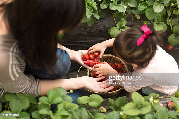 Young mother and baby daughter picking strawberry