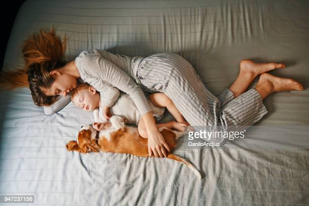 young mother enjoys nap time with her baby and puppy - animal stage stock photos and pictures