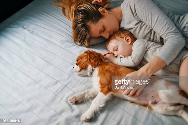 young mother taking a nap with her babies - pets stock pictures, royalty-free photos & images