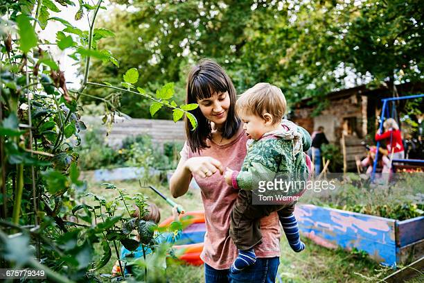 young mother with child in community garden - urban garden stock pictures, royalty-free photos & images