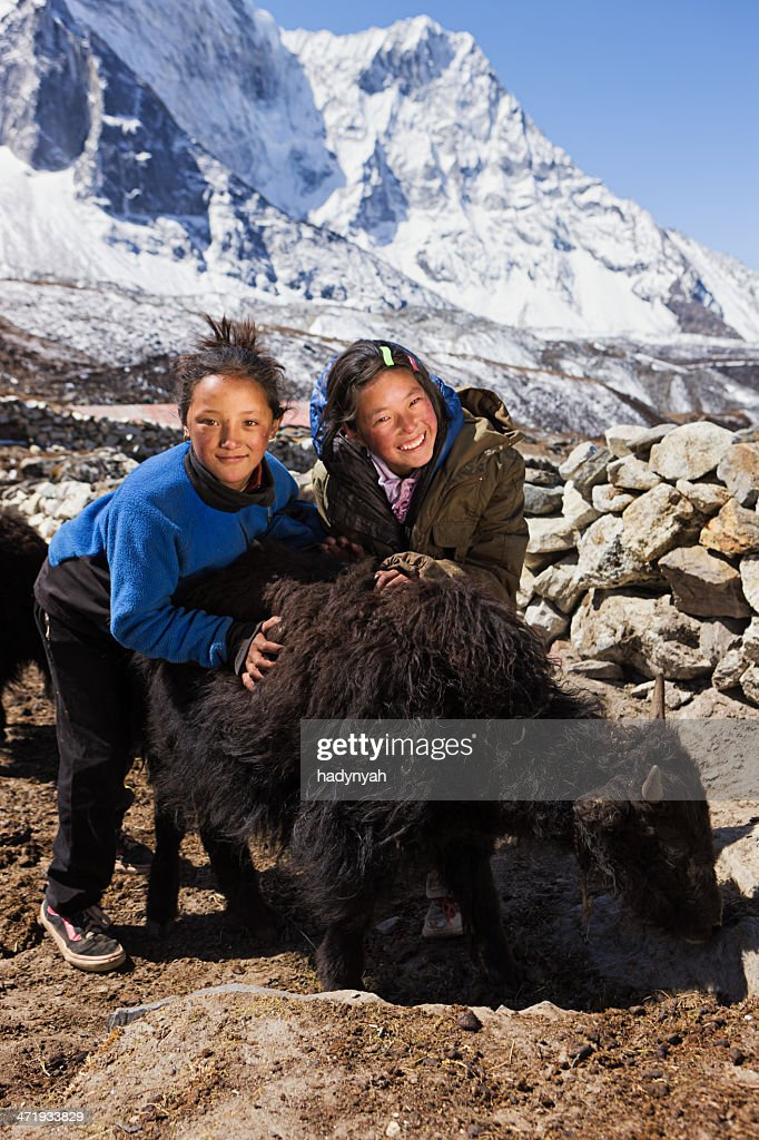 Young Nepali girls playing with yaks : Stock Photo
