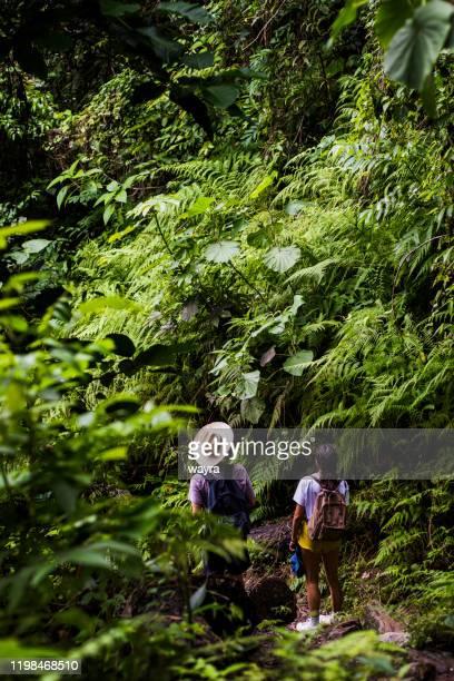 若者は、トペス・デ・コランテス自然保護区公園、エスカンブレイ山脈、サンクティ・スピリトゥス地区、キューバで密集した植生を探索 - アンティル諸島 ストックフォトと画像