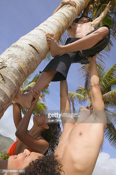 Young people helping man climb coconut palm tree