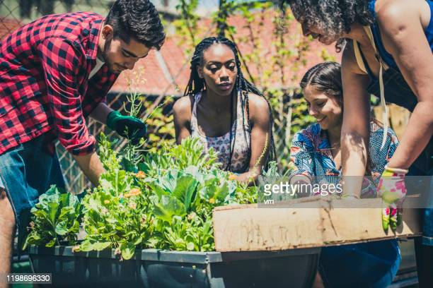 young people learning urban gardening - community stock pictures, royalty-free photos & images