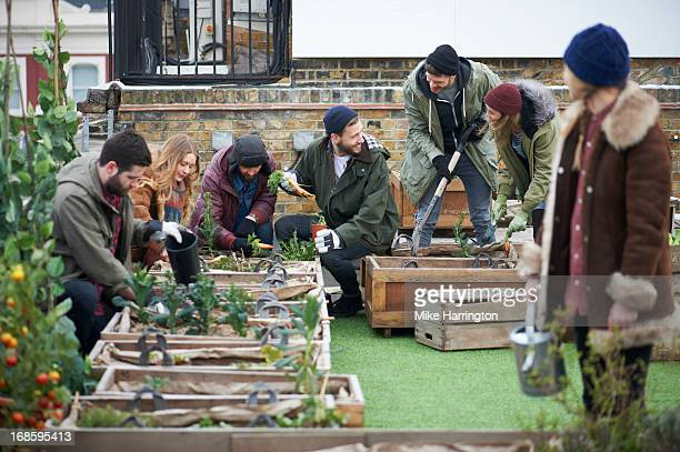Young people working together in urban roof garden