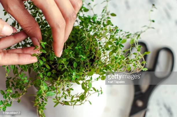 a young person is gardening indoor - ramo parte de uma planta imagens e fotografias de stock