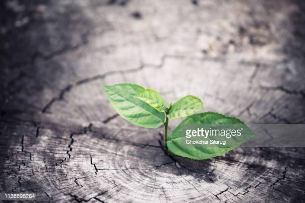 young plant growing on stump - seedling stock pictures, royalty-free photos & images