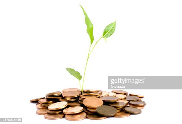 young plant growth through a stack of coins - guyana stock pictures, royalty-free photos & images