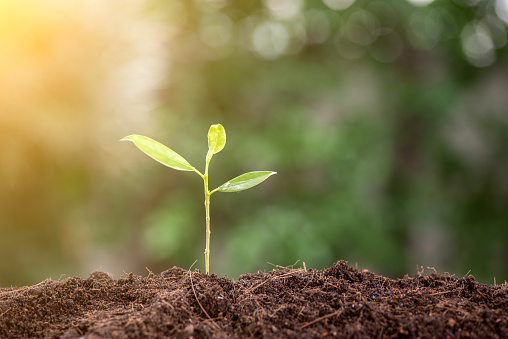 Young plant in the morning light on nature background - gettyimageskorea