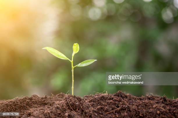 young plant in the morning light on nature background - erdreich stock-fotos und bilder