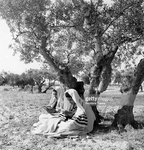 Young practising Jews reading under an olive tree in Djerba Tunisia around 1970 Djerba is one of North Africa's oldest Jewish communities