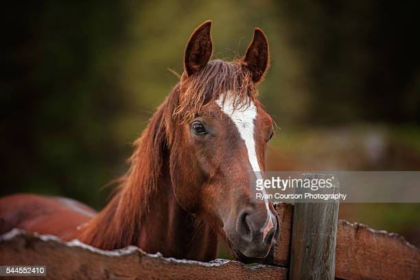 60 Top Quarter Horse Pictures, Photos, & Images - Getty Images