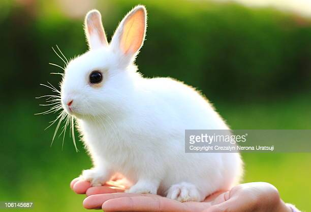 Young Rabbit on Hand