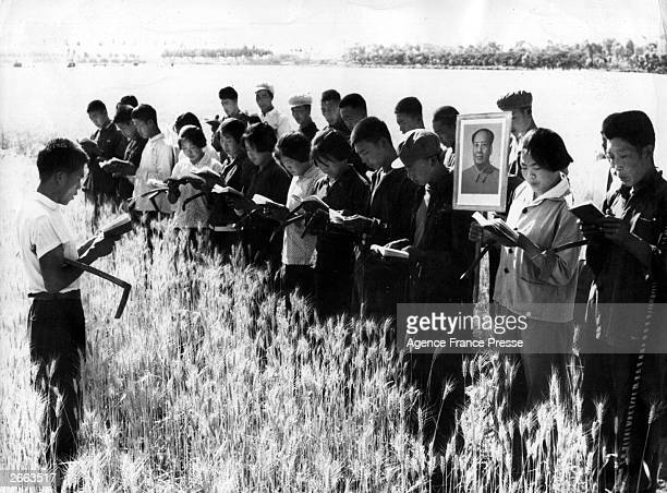 Young recruits read the 'Thoughts of Mao' before helping farmers with the harvest