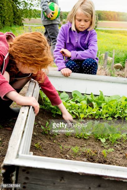 Young redhead girl showing a growing radish in home garden.