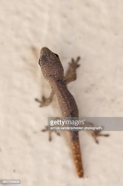 young reptile. - vertebras fotografías e imágenes de stock