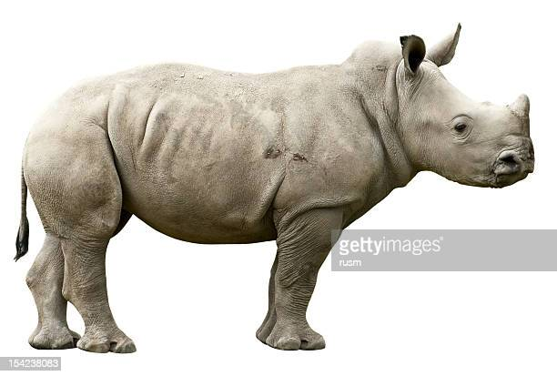 Young Rhino with clipping path on white background