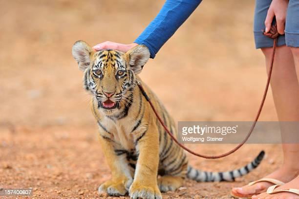 Asustada joven con su entrenador cachorro de tigre