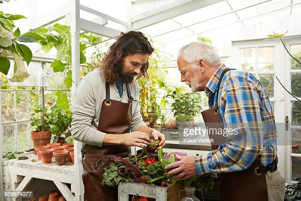 Young & senior man looking at misc. vegetables