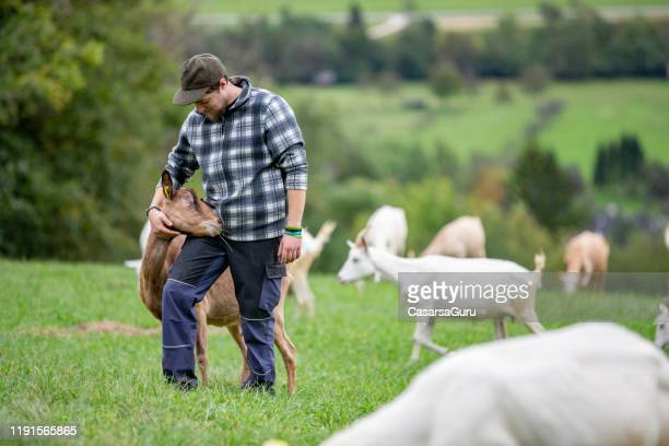 young shepherd taking care of his herd of goats - stock photo - shepherd stock pictures, royalty-free photos & images