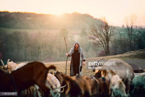 young shepherd with herd of goats - shepherd stock pictures, royalty-free photos & images