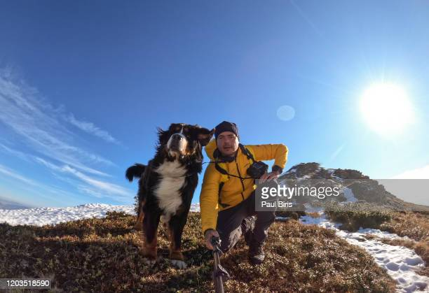 young sportive man taking selfie with his beautiful bernese mountain dog - trained dog stock pictures, royalty-free photos & images