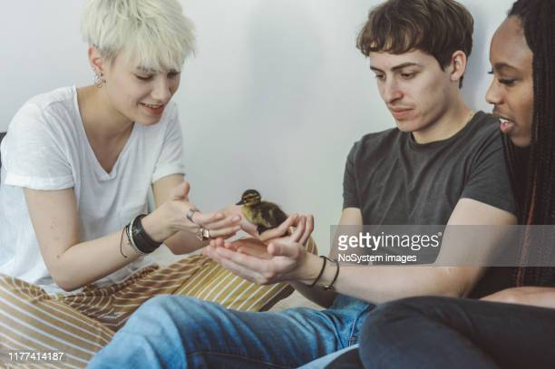 young students and their pet - ducking stock pictures, royalty-free photos & images