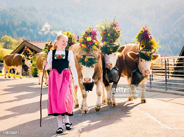 young swiss farmer girl leading cows to fair - swiss culture stock pictures, royalty-free photos & images