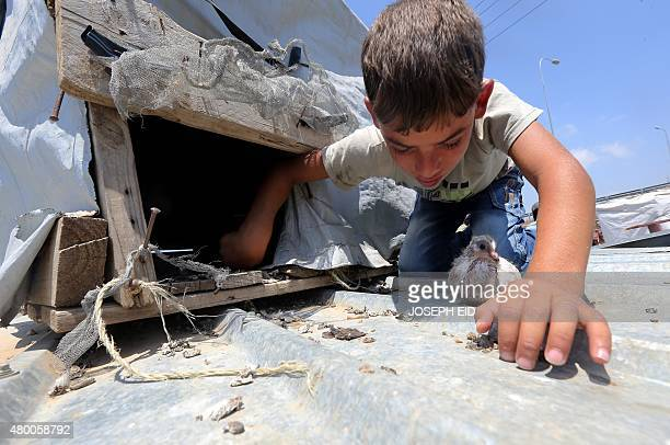 A young Syrian refugee boy tends to his pigeons at an informal refugee camp in the area of Zahrani south of the Lebanese capital Beirut on July 9...