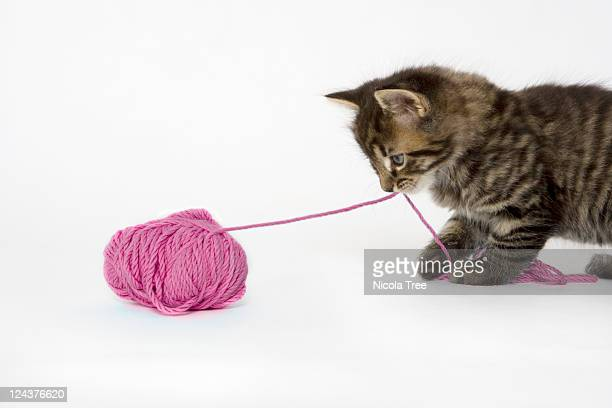 A young tabby kitten playing with a ball of wool.