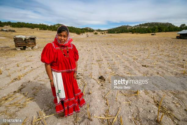 una mujer raramuri (tarahumara) agricultoren en un campo de maíz completamente árido en el norte de méxico - tarahumara fotografías e imágenes de stock
