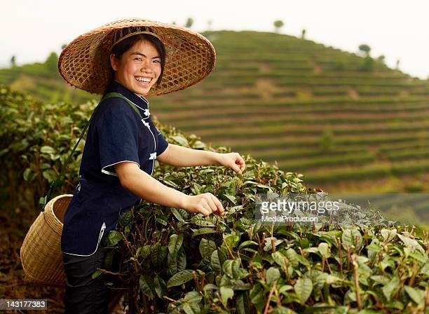 Young Tea picker