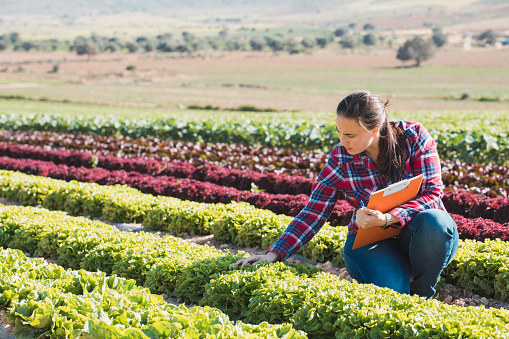 young technical woman working in a field of lettuces with a folder 948055100